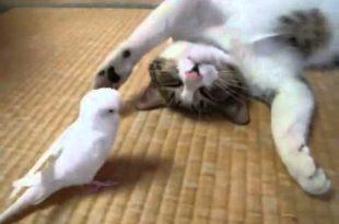 صورة القط والعصافير , اجمل صور الهررة والطيور