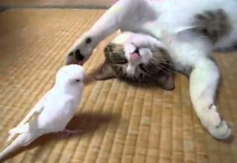 صور القط والعصافير , اجمل صور الهررة والطيور