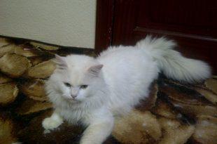 صورة قطط رومي , اجمل وارق قطط