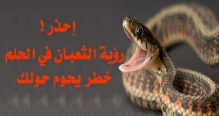 صور الثعابين في المنام , تفسير حلم الثعابين
