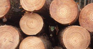 صور انواع الخشب , اشهر انواع الخشب