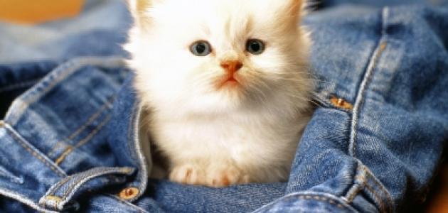 صورة اجمل صور قطط , صور تجنن للقطط
