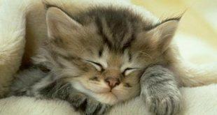صور اجمل صور قطط , صور تجنن للقطط