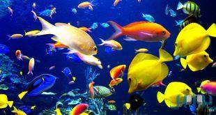 معلومات عن الاسماك